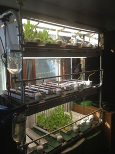 A Seed Starting Autogarden