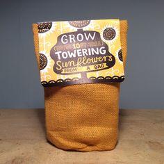 Grow Towering Sunflower – Pitfield London
