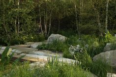 RHS Chelsea 2012 designed by  Sarah Price. At the rear of the garden a glade of tall, graceful, multi-stemmed birch trees famed the scene.