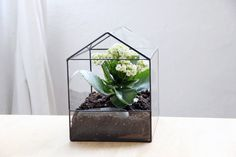 glass terrarium house by boxwoodtree on Etsy