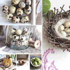 seidenfein 's Dekoblog: Wachteleier * Quail eggs Dekoblog, Quail Eggs, Shop, Dekoration, Store