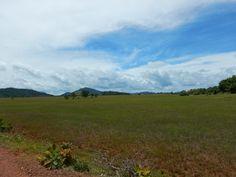 In het zuiden van Guyana vindt je de Rupununi savanne #Guyana