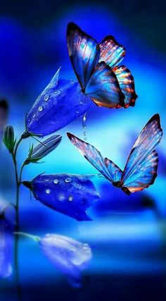 Nature's Beautiful Butterflies