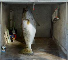 Fotoplane für Garagentor Fisch / Garage Mural Fish