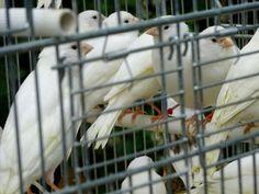 Paris Markets, Parrot, Parrot Bird, Parrots