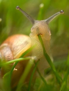 Snail on grass...it's legal in some states...