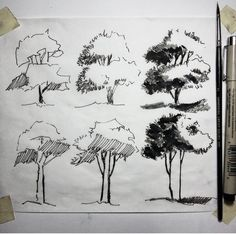 the trees in subtropical regions. Plant Sketches, Tree Sketches, Drawing Sketches, Drawing Ideas, Realistic Drawings, Easy Drawings, Pencil Drawings, Landscape Sketch, Landscape Drawings
