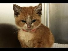 Stray Cat Brings a Tiny Surprise to Woman who Gave Her Food - YouTube