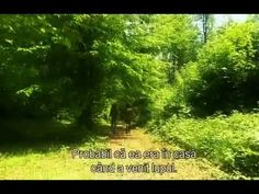 The most beautiful documentary about Romania on Travel Channel (it went viral! Beautiful Places To Visit, Wonderful Places, Visit Romania, Best Documentaries, Travel Channel, Travel Videos, Central Europe, Continents, Country Roads