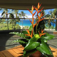 """27 Gostos, 1 Comentários - Green Point Nurseries, Inc. (@greenpointnurseries) no Instagram: """"A lovely arrangement to go with a magnificent view at the @hapunabeachhotel. #greenpointnursery"""""""