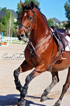 No rider, no problem! Ceara Rahne Photography