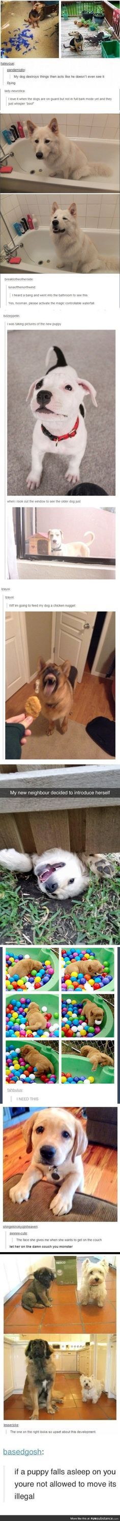 Tumblr Dog edition. Ha-ha the first one is the best