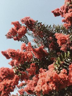 Flowers don't hear compliments, they don't need - flowers .-Blumen hören keine Komplimente, sie brauchen keine – Blumen Natur Ideen Flowers don't hear compliments, they don't need / - Aesthetic Iphone Wallpaper, Aesthetic Wallpapers, Garden Care, Flowers Nature, Beautiful Flowers, Animals Beautiful, Amazing Gardens, Beautiful Gardens, Fred Instagram