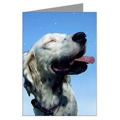 From Another Chance for English Setters.