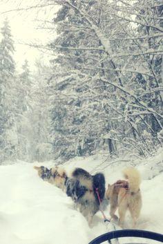 On réalise un rêve dans les #montagnesdujura : une balade en chiens de traîneau, à Giron avec L'attitude-Nord. http://www.onedayonetravel.com/itinerance-montagnes-du-jura-en-hiver/