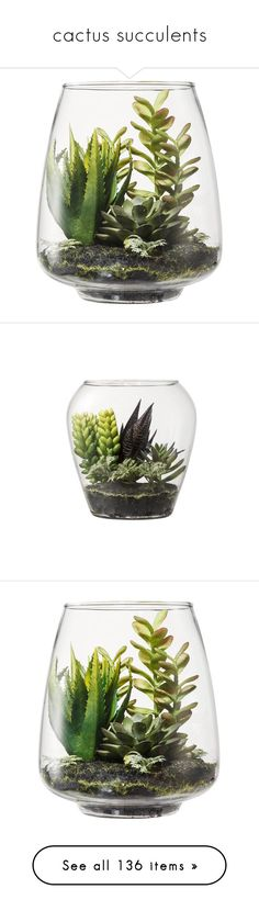 """""""cactus succulents"""" by tinkertot ❤ liked on Polyvore featuring home, home decor, floral decor, plants, fillers, decor, flowers, succulent terrarium, glass succulent terrarium and threshold home decor"""