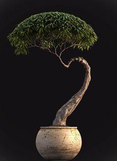 - A LONG TIME GONE - - thekimonogallery:   Bonsai