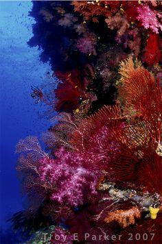 Coral Reef Riot by ~arterius on deviantART Beneath The Sea, Under The Sea, Sea Plants, Underwater Art, Deep Blue Sea, Ocean Creatures, Beautiful Ocean, Sea And Ocean, Sea World