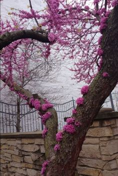 Love this red bud tree doing it's best to make a heart. Heart Pictures, Nature Pictures, Beautiful Pictures, Heart In Nature, Nature Landscape, Heart Tree, I Love Heart, Amazing Nature, Wonders Of The World