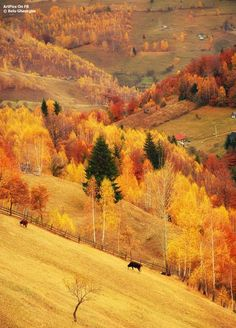 Romania in fall Beautiful World, Beautiful Places, Beautiful Pictures, Vida Natural, Little Paris, Autumn Scenes, Fete Halloween, Fall Pictures, Amazing Nature