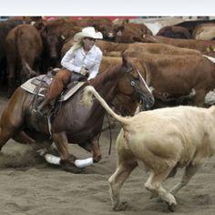 CuttingCutting western quarter paint horse appaloosa equine tack cowboy cowgirl rodeo ranch show pony pleasure barrel racing pole bending saddle bronc gymkhana