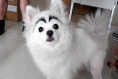 21 Cats and Dogs With Awesome Markings