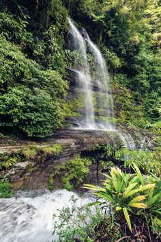 Agua Selva, Tabasco, México. Mexico Travel, Stunning View, Cancun, Vacation Destinations, Homeland, Amazing Nature, Wonderful Places, Waterfalls, Landscapes