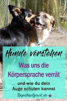 Körpersprache der Hunde – Wie Hunde mit ihrem Körper und ihrer Mimik kommunizieren und wie wir lernen können, genauer hinzusehen.   thepellmellpack.de