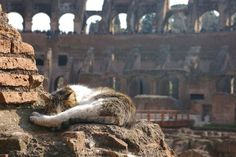 25 Absolutely Stunning Photos Of Cats In Beautiful Places Around The World