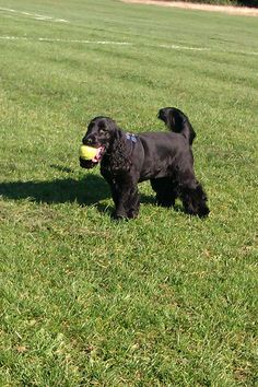 My dogs are the best ! Clapham South Dog Walking Services SW4(www.harrisons-dogs.co.uk)