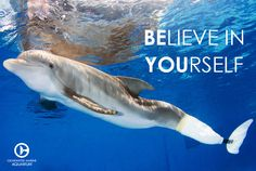 I cant believe I'm going to see winter spring break:)! Dolphin Tale 2, Dolphin Art, Clearwater Marine Aquarium, Clearwater Beach, Dolphin Quotes, Rare Animals, Strange Animals, Killer Whales, Ocean Life