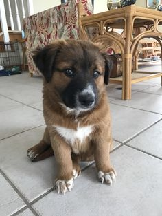 What mix would you say this puppy is? We're trying to figure it out. No knowledge of the parents.   http://ift.tt/2onChh6 via /r/dogpictures http://ift.tt/2pioFAW  #lovabledogsaroundtheworld