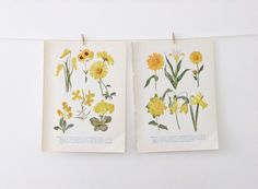 Vintage Flower Illustrations - floral prints in yellow via #Etsy #peonyandthistle