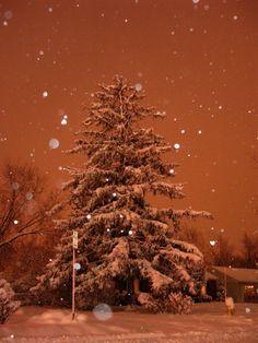 Buffalo, NY, USA Christmas 2004