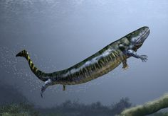 "Eogyrinus attheyi (""dawn tadpole"")