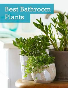 Learn about the 6 best houseplants you can grow in the bathroom with the requirements and basic care needed!
