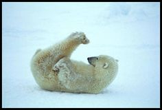 kids sliding on ice - Google Search