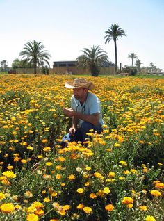 Farm Stories: A trip to organic herb farms in Egypt with Mountain Rose Herbs.
