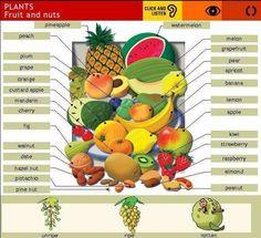 fruits-vocabulary