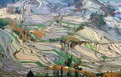 Hani Rice Terraces, found in the mountains above Yuanyang, in southwest China