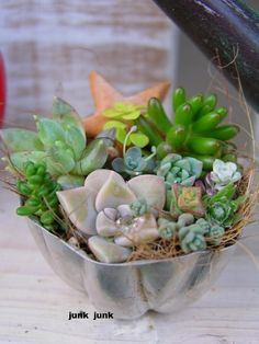 ~C~ succulents in cake pan and many more pics...not in English