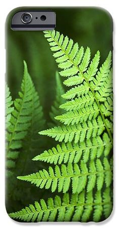 Curved #Fern #Leaf #Art iPhone 6 Case by Christina Rollo.  Protect your iPhone 6 with an impact-resistant, slim-profile, hard-shell case.  The image is printed directly onto the case and wrapped around the edges for a beautiful presentation.  Simply snap the case onto your iPhone 6 for instant protection and direct access to all of the phones features!