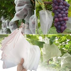 Garden Plants Vegetable, Fruit Garden, Edible Garden, Growing Plants, Growing Vegetables, Vivre Bio, Hydrangea Care, Gardening For Beginners, Plant Care