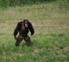 WE LOVE COZI - Escape to Chimp Eden