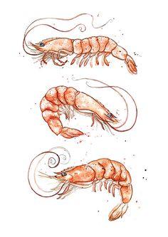 Giclee Fine Art Print: Pink Shrimp (Prawns) Watercolour Painting - Giclee Fine Art Print: Pink Shrimp Prawns by AmyHolliday on Etsy - Fish Drawings, Animal Drawings, Art Drawings, Watercolor Fish, Watercolour Painting, Painting Art, Watercolors, Paintings, Louisiana Art