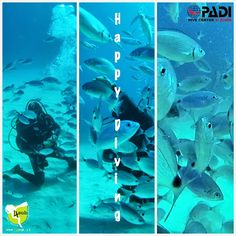 Happy Diving....with 4sub.......