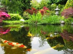 I would love to have a koi pond but I have this fear that a bird of prey or a cat will swipe some out of the water...