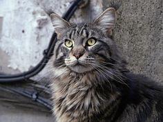 Sauron | Flickr - Photo Sharing!