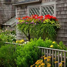 Photo: Deborah Whitlaw Llewellyn   thisoldhouse.com   from Plant a Better Window-Box Garden
