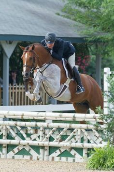 """""""Lorando B"""" - photo posted by Horse Talk, via Facebook; somatic mutation; Swedish Warmblood stallion; Lorando B is now known by a new show name """"Remarkable"""" (and he's now a gelding). He is best known for winning the 2014 U.S. Hunter Jumper Association Pre-Green Incentive Championship, with Scott Stewart riding him. - new name info from Horse Nation (http://www.horsenation.com/2016/02/04/fleeceworks-morning-feed-horse-of-a-different-color/)"""